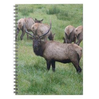 Alces y manada de Bull Notebook
