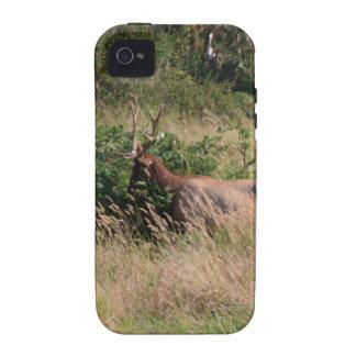 Alces y zarzamoras de Bull Vibe iPhone 4 Fundas