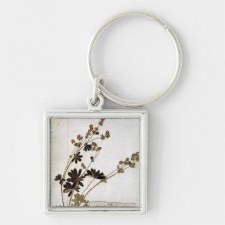 Alchemilla, from a Herbarium Keychain