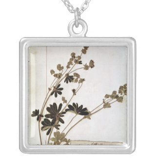 Alchemilla, from a Herbarium Silver Plated Necklace