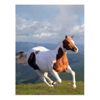 Alcohol del caballo salvaje tarjeta postal