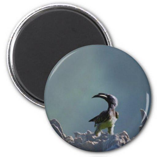 Alcohol del guerrero del pájaro del Hornbill Imán Redondo 5 Cm