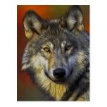 Alcohol del lobo - regalos de la foto del lobo de  postal