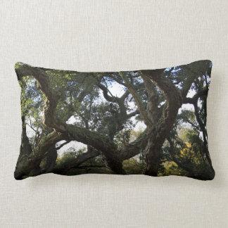 Alcornoque o árbol del corcho, árbol elegante cojín