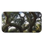 Alcornoque o árbol del corcho, árbol elegante iPhone 4/4S funda