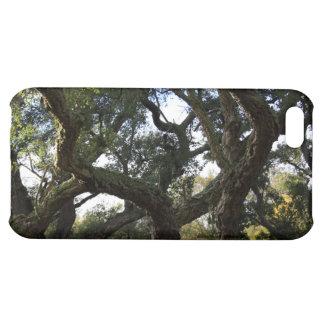 Alcornoque o árbol del corcho, árbol elegante
