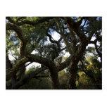 Alcornoque o árbol del corcho, árbol elegante postales