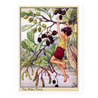 Alder Fairy Postcard