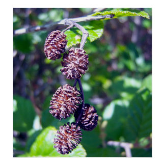 Alder Seeds 1 Poster