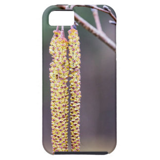 Alder twigs with yellow hanging catkins in spring iPhone SE/5/5s case