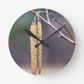 Alder twigs with yellow hanging catkins in spring round clock