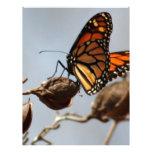 Alegría de la mariposa plantillas de membrete