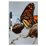 Alegría de la mariposa tableros blancos