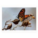 Alegría de la mariposa tarjeta postal