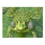 alegría de la paz de la rana del grenouille postales
