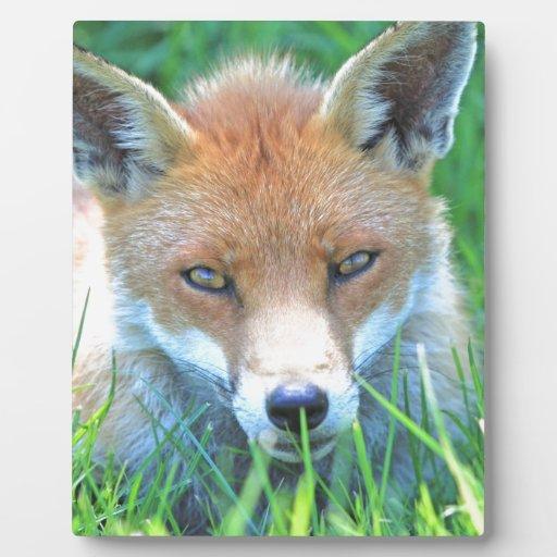 alegría de la paz del zorro placa