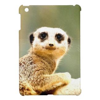 alegría del amor de la paz del meerkat del suricat