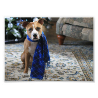Alegría del día de fiesta del perro del rescate fotografía