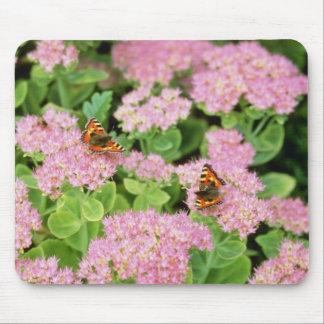 Alegría rosada del otoño de Sedum con las flores d Tapetes De Raton