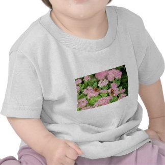 Alegría rosada del otoño de Sedum con las flores Camisetas