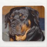 Alemán Rottweiler Alfombrilla De Ratón