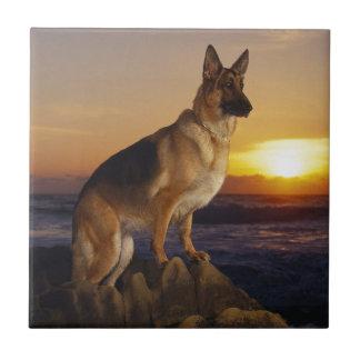 Alemán Shepard en la puesta del sol Azulejo