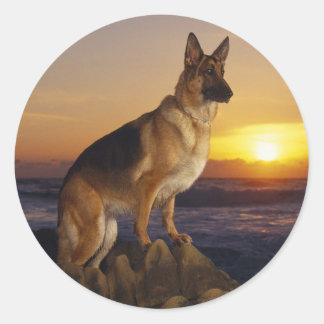 Alemán Shepard en la puesta del sol Etiquetas Redondas