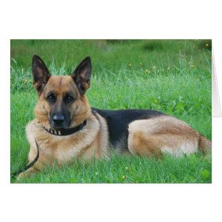 Alemán Sheperd - tarjeta de felicitación del perro