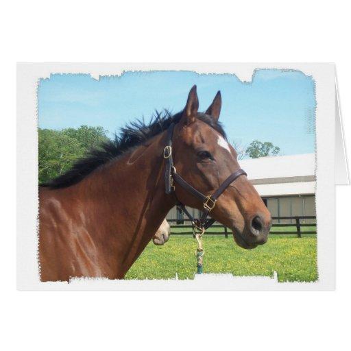 Alert Arab Horse Greeting Card