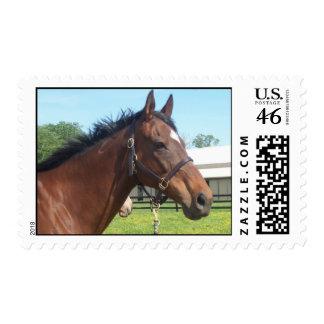 Alert Arabian Horse Postage Stamp