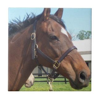 Alert Arabian Horse Tile