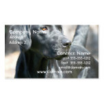 Alert Black Labrador Retriever Business Cards