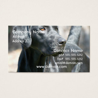Alert Black Labrador Retriever Business Cards