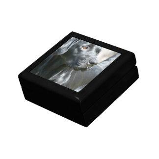 Alert Black Labrador Retriever Dog Gift Box