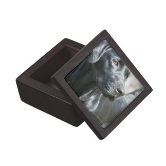 Alert Black Labrador Retriever Dog Premium Box Premium Trinket Box
