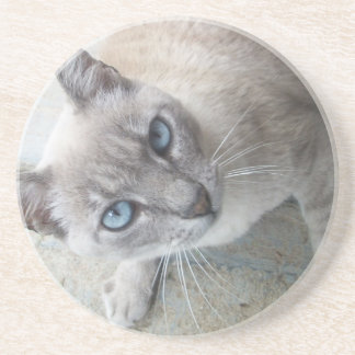 Alert Cat Coaster