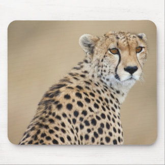 Alert Cheetah Acinonyx jubatus), Masai Mara Mouse Pad