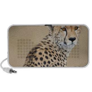 Alert Cheetah Acinonyx jubatus), Masai Mara Travel Speaker