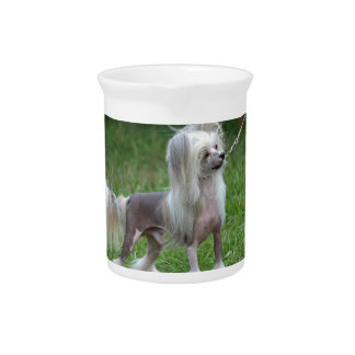 Alert Chinese Crested Dog Pitchers