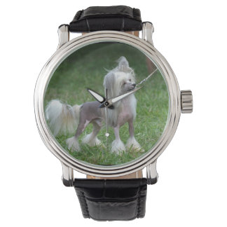 Alert Chinese Crested Dog Wrist Watch