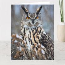 Alert Eagle Owl Card