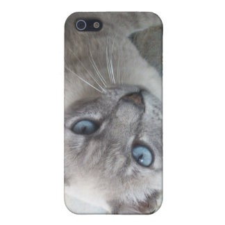 Alert Kitty Cases For iPhone 5
