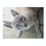 Alert Kitty Post Cards