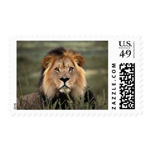 Alert Lion Postage Stamp