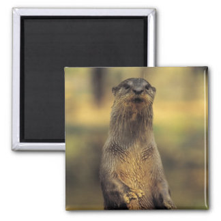 Alert Otter Magnet