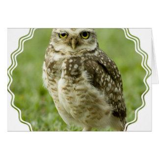 Alert Owl Greeting Card