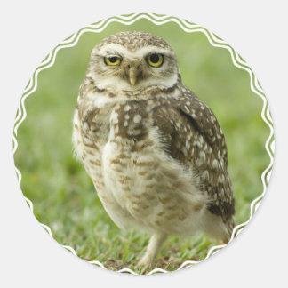 Alert Owl Stickers