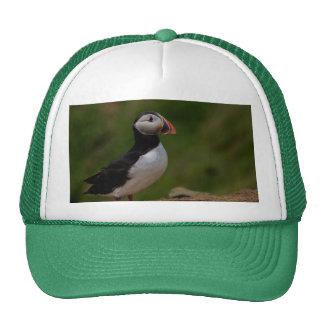 Alert Puffin Trucker Hat