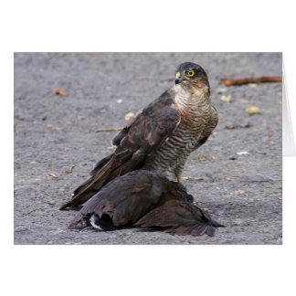 Alert Sparrowhawk Card