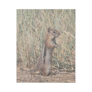 Alert Squirrel Gallery Wrap
